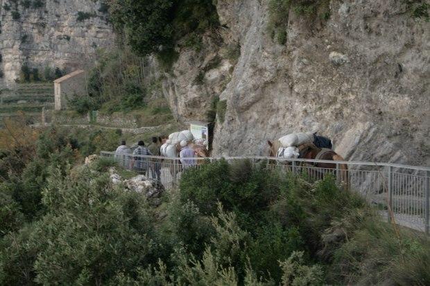 Trasporto merci sui muli sul Sentiero degli Dei