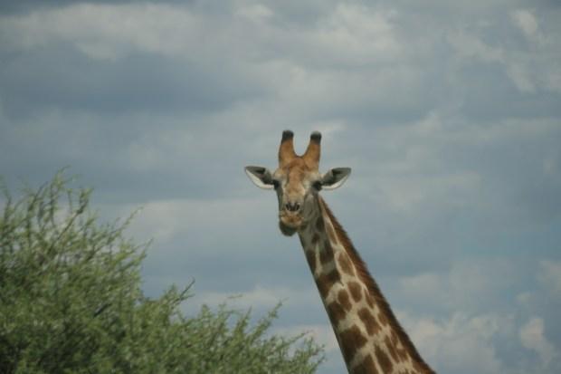 Itinerario tra Sudafrica e Namibia: Etosha Park