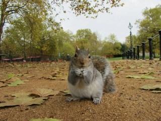 I parchi e i giardini di Londra