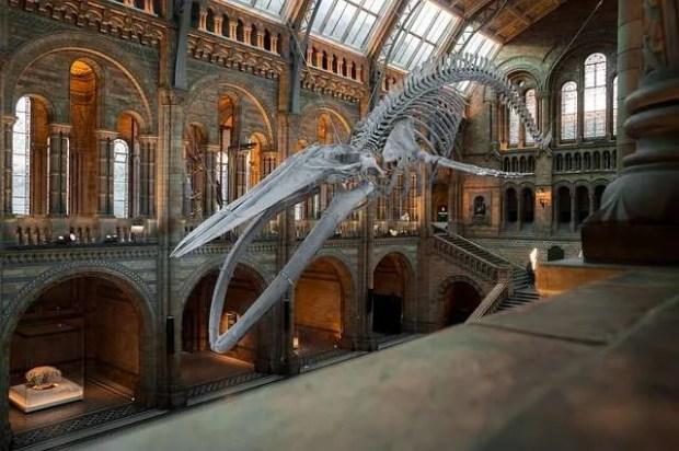Londra low cost: l'interno del Museo di Storia Naturale