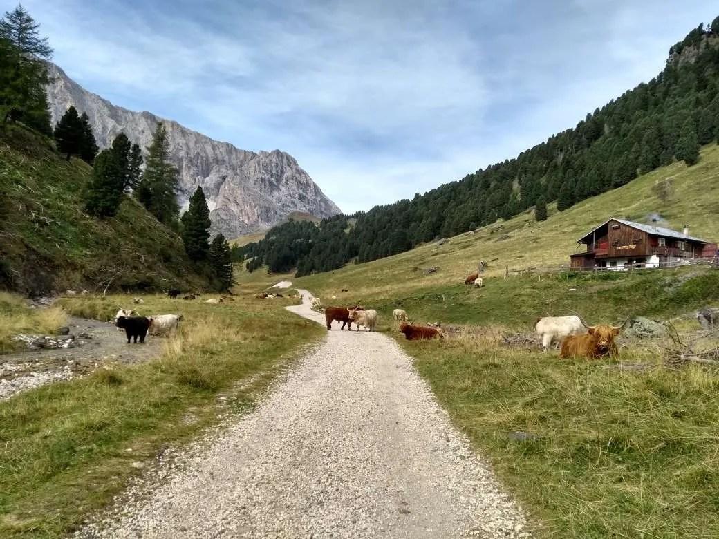 Da Campitello al Rifugio Alpe di Tires attraversando la Val Duron