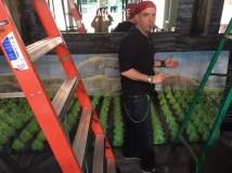 Taco Agave In Pensacola Art
