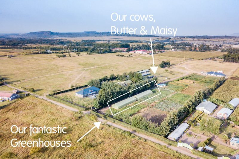 Greenhouse & Cows thanks to Association Femmes d'Europe