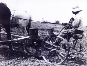 As a young man, Cheri Sakai's husband used a horse-driven plow like this one.