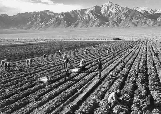 """Ansel Adams, """"Potato Field,"""" 1943. Gelatin silver print (printed 1984). Private collection; courtesy of Photographic Traveling Exhibitions."""