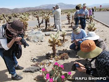 サボテンとサボテンの花を撮影する生徒たち