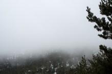 Niebla en el Pinar del Valle