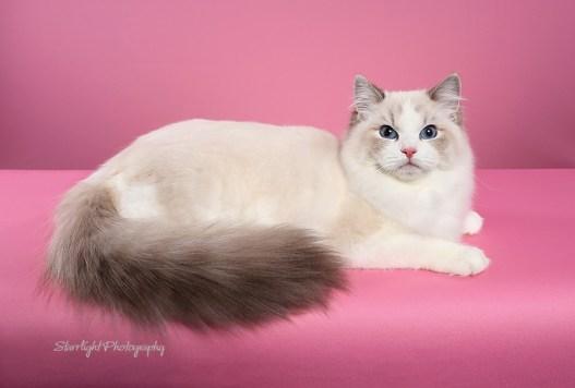 Dreamfinder Camellia of Creekcats