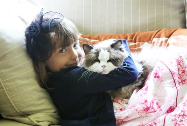 Sweet Ragdoll Kitty Hugs