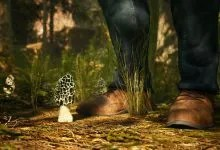 Photo of MORELS: THE HUNT