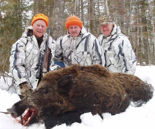Boar Hunting in the Winter Snows