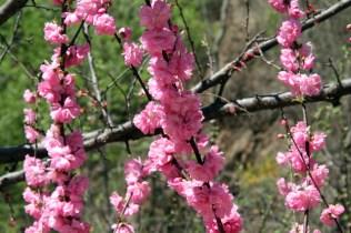 Il y a des jolies fleurs en chemin