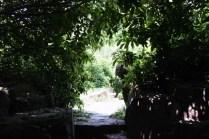 Plum garden et ses petits sentiers
