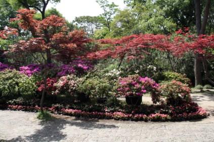 Une zone fleurie, chose pas si commune en Chine