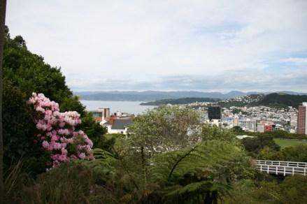 Vue sur Wellington depuis le jardin botanique