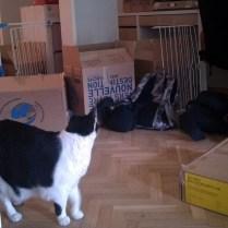 Des cartons et du chat