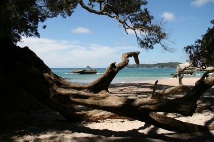 NZ_CATHEDRAL_COVE_23