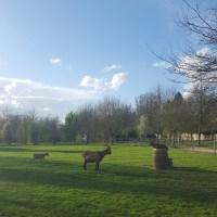 Les chèvres du Hameau de la Reine