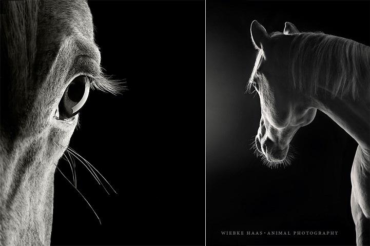 fotografie cai alb-negru