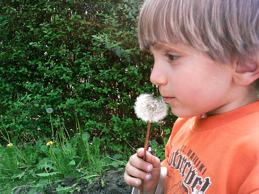 Benny mag Pusteblumen