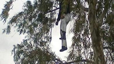 صورة شخص ينهي حياته شنقا بشجرة في غابة السلوقية