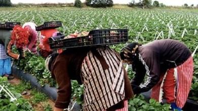 صورة العاملات الفلاحيات : من الاقصاء الاجتماعي الى القهر الاقتصادي