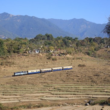 The Kangra Part 4