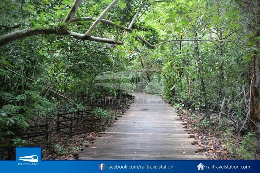 Chek Jawa Wetlands 027