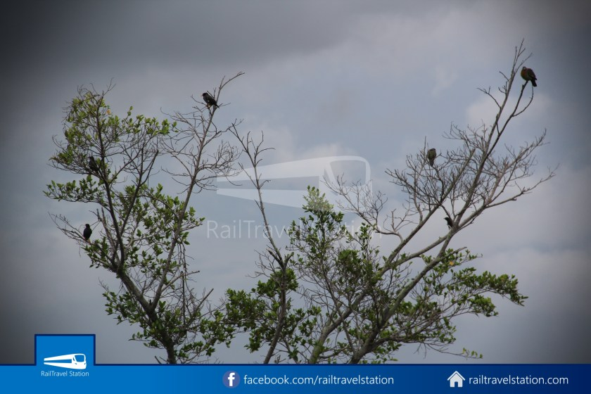Chek Jawa Wetlands 035
