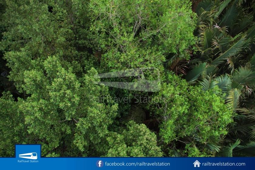 Chek Jawa Wetlands 039