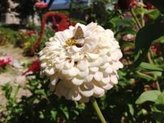U of U Student Garden 2012