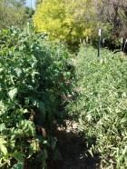 Real Food Rising Farm