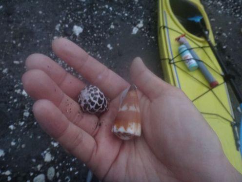 Gorgeous shells everywhere.