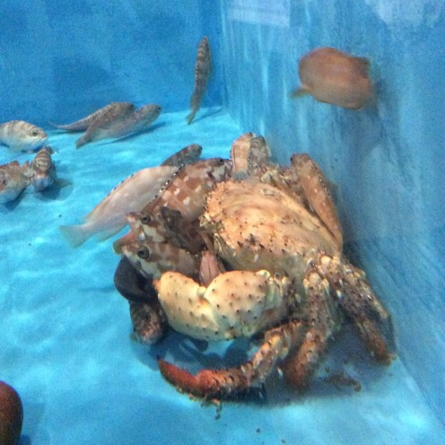 At the aquarium, home to a display of the island's prolific aquatic life, this huge crab is just chilling, and a handful of fish rest in its grip.