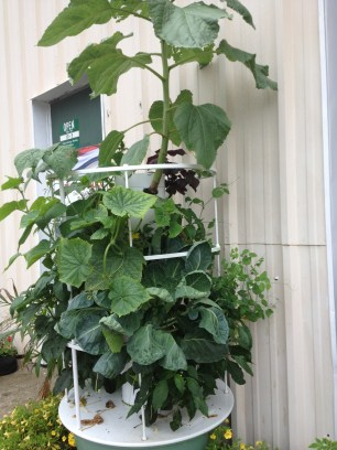The Tower Garden at our store in July