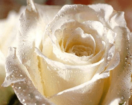 Тереза Зуми Самнер: Эмоциональный день приближается со скоростью Любви| Важная информация о дне События (7.11.2015) 4