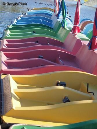 vibrant colours paddleboats
