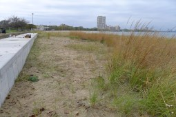 After. 1000 marram grass stolons will fill this area with native marram grass in just a few seasons!