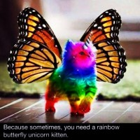 For my @wendybird4433 💗💗💗 #cute #rainbow #butterfly #unicorn #kitten #colours #sparkles #magic #iwantone