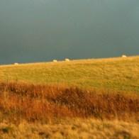 Golden North on Rainbow Heirloom Lush Chunky