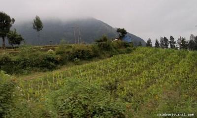 Cemoro Lawang to Bromo, Indonesia