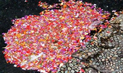 Some of the flower petals washed to the sides of the spring.
