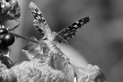 Week 38:This was taken a few years ago. I was so pleased to be able to capture a butterfly this close and loved the angle.