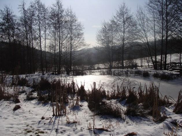Gefrorener Teich im Wildtierpark Germerode