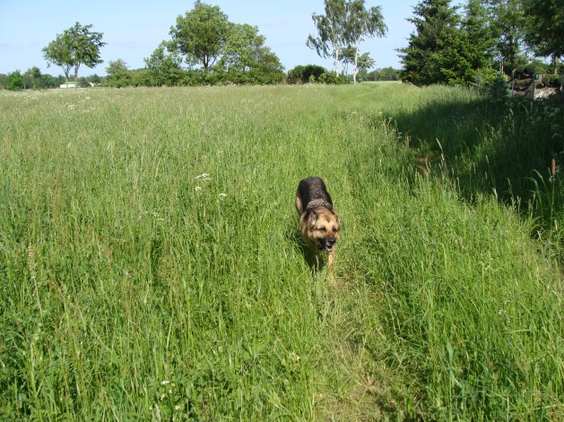 Lucie rennt durch das hohe Gras