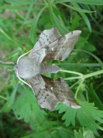 Was für Flügel