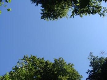 Die Bäume wachsen hier in den Himmel