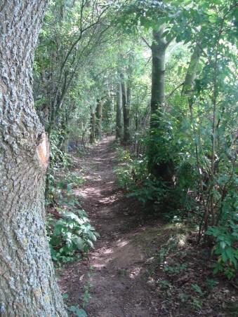 Kleiner Weg in unserer Vogelschutzhecke