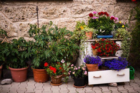 Gartenbauverein-1005422