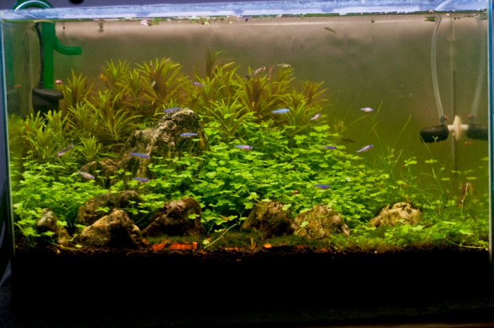 10 gallon rimless freshwater planted tank